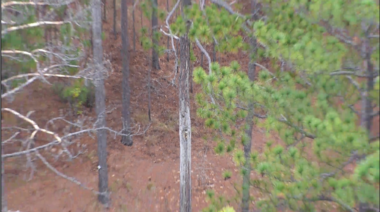 WHITE PAPER: A NEW TOOL IN ENDANGERED SPECIES PROTECTION AND MANAGEMENT: RED-COCKADED WOODPECKER (RCW) SURVEYS USING UNMANNED AERIAL SYSTEMS (UAS)